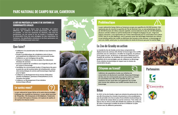 Gorillas in Cameroun