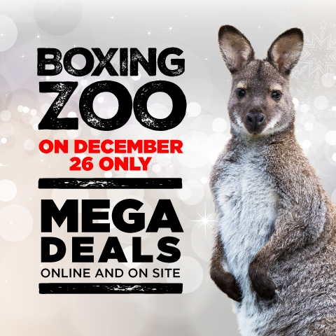 Boxing Zoo Mega Deals Online And On Site December 26 Only